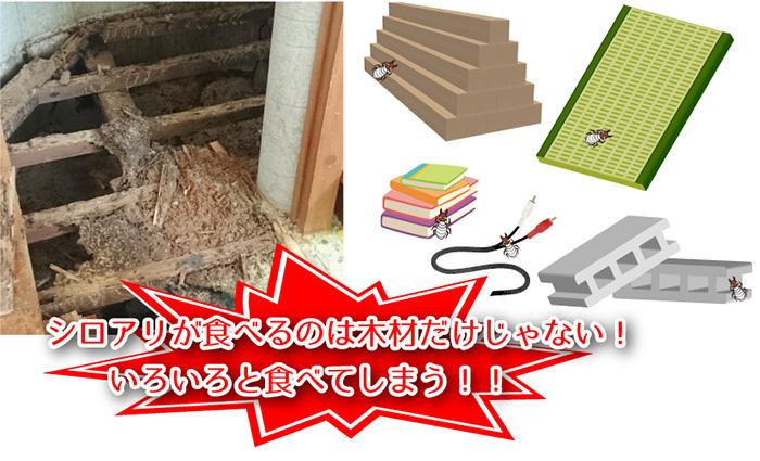 木材やコンクリートを食べる